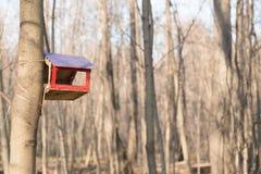 Alimentatore degli uccelli nel legno di autunno Fotografia Stock