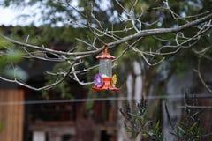 Alimentatore del colibrì fotografie stock libere da diritti