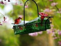 Alimentatore del colibrì immagini stock libere da diritti