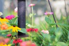 Alimentatore del giardino Fotografia Stock