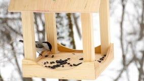 Alimentatore dell'uccello nel parco archivi video
