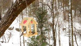 Alimentatore dell'uccello nel parco stock footage