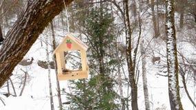 Alimentatore dell'uccello nel parco video d archivio