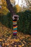 Alimentatore dell'uccello nel parco Il tronco di albero è decorato con di una cosa tricottata a strisce colorata multi immagine stock