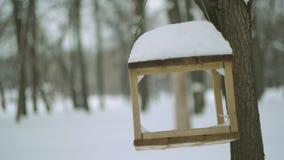 Alimentatore dell'uccello nella foresta di inverno stock footage