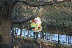 Alimentatore dell'uccello su un albero nel parco immagini stock libere da diritti