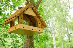 Alimentatore dell'uccello su una foresta dell'albero in primavera Fotografie Stock Libere da Diritti