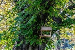 Alimentatore dell'uccello sull'albero fotografia stock