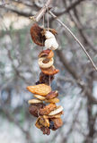 Alimentatore di Fird sul ramo di un albero Immagine Stock
