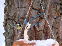 Alimentatore di legno dell'uccello con un capezzolo fotografia stock libera da diritti