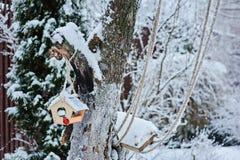 Alimentatore di legno dell'uccello sull'albero in giardino di inverno nevoso fotografia stock