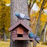 Alimentatore di legno per gli uccelli Fondo verde Fotografia Stock Libera da Diritti