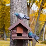 Alimentatore di legno per gli uccelli Fondo verde Fotografie Stock Libere da Diritti