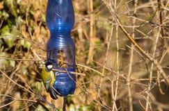 Alimentatore per gli uccelli immagine stock