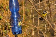 Alimentatore per gli uccelli fotografia stock libera da diritti