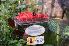 Alimentatore per le farfalle Immagine Stock Libera da Diritti