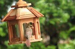 Alimentatore w/Cardinal dell'uccello Immagine Stock