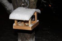 Alimentatori dell'uccello Fotografie Stock Libere da Diritti