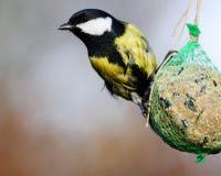 Alimentazione degli uccelli Fotografia Stock Libera da Diritti
