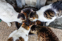 Alimentazione dei gatti Fotografia Stock Libera da Diritti