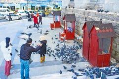 Alimentazione dei piccioni Immagine Stock
