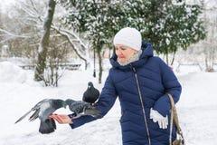Alimentazione dei piccioni affamati dalle mani Fotografie Stock Libere da Diritti