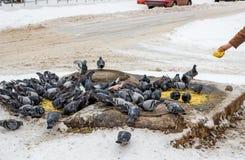 Alimentazione dei piccioni della città fotografie stock libere da diritti