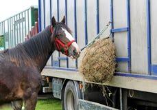 Alimentazione del cavallo. Fotografie Stock Libere da Diritti
