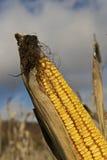 alimentazione del cereale Fotografia Stock Libera da Diritti