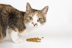 Alimentazione del gatto Fotografie Stock Libere da Diritti