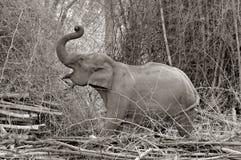 Alimentazione dell'elefante asiatico Fotografia Stock Libera da Diritti