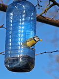 Alimentazione dell'uccello fotografia stock libera da diritti