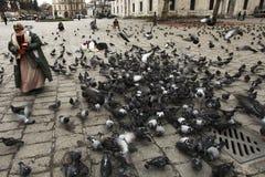 Pingeons d'alimentazione della donna Fotografia Stock