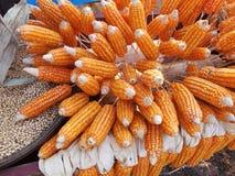 Alimentazione di Cornl Fotografia Stock