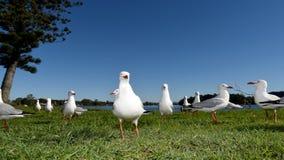 Alimentazione di Seasgulls Immagine Stock Libera da Diritti