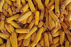 Alimentazione organica del cereale memorizzata per l'inverno Fotografia Stock