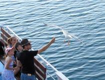 Alimente la gaviota en el mar, Keramoti, Grecia Fotos de archivo libres de regalías