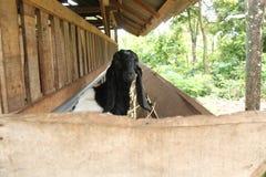 Alimente las cabras en la jaula, versión 2 fotos de archivo
