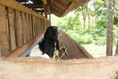Alimente las cabras en la jaula, versión 18 imagenes de archivo