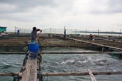 Alimente los pescados Fotografía de archivo