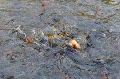 Alimente los pescados con pan fotos de archivo libres de regalías