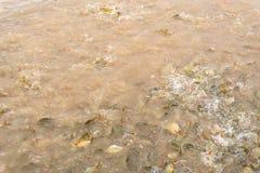Alimente o grupo de carpa dos peixes foto de stock