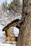 Alimenter-cuvette pour des oiseaux Photos stock