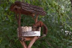 Alimenter d'écureuil rouge Photo libre de droits