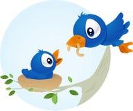 Alimenter d'oiseau Image stock