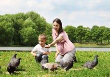 Alimenter les pigeons Image libre de droits