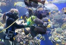 Alimenter les poissons de récif coralien Images libres de droits