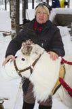 Alimenter un jeune renne, la Suède Images stock