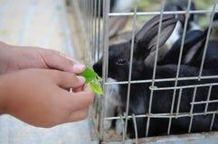 Alimenter un lapin Images libres de droits