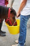 Alimenter un poney photos libres de droits